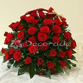 Przepych pięknych czerwonych róż