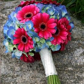 Odważny kolorowy bukiet ślubny – amarant i błękit