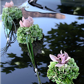 Zieleń hortensji i róż storczyka