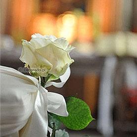 Ślubna biel róży